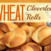 Wheat Cloverleaf Rolls