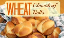 clover rolls 5